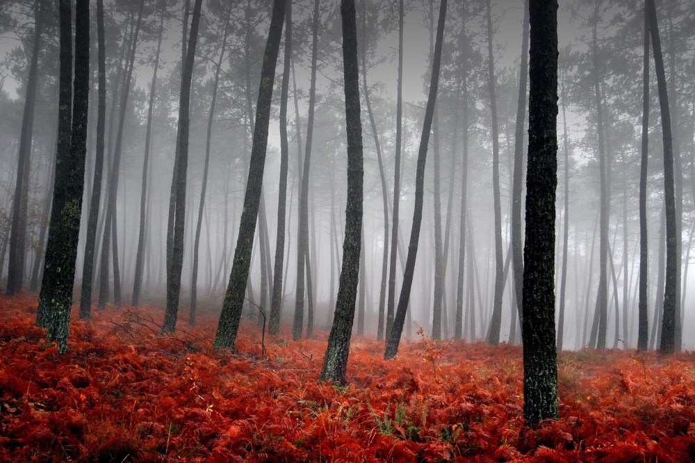 Forest-litter