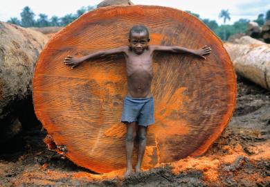 Nigeria Deforestation Pic By MARK EDWARDS