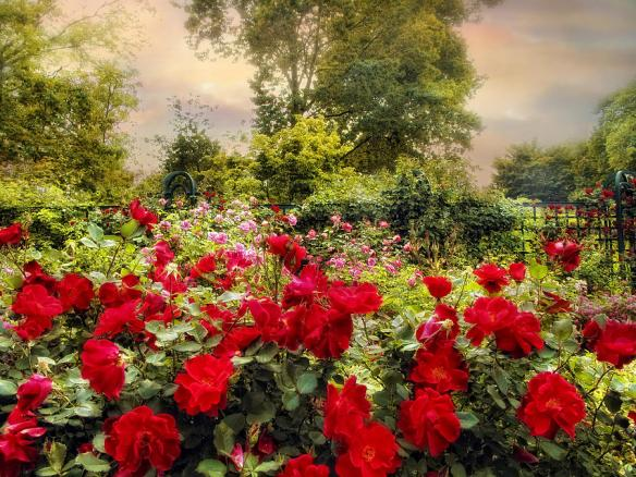 Red Rose Garden by Jessica Jenney